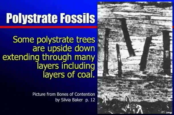 Carbon dating period of fossils